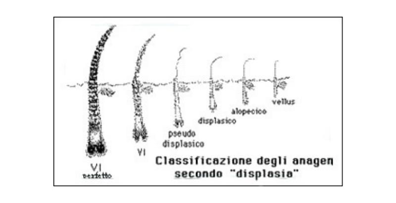 классификация жизни волос _ 02